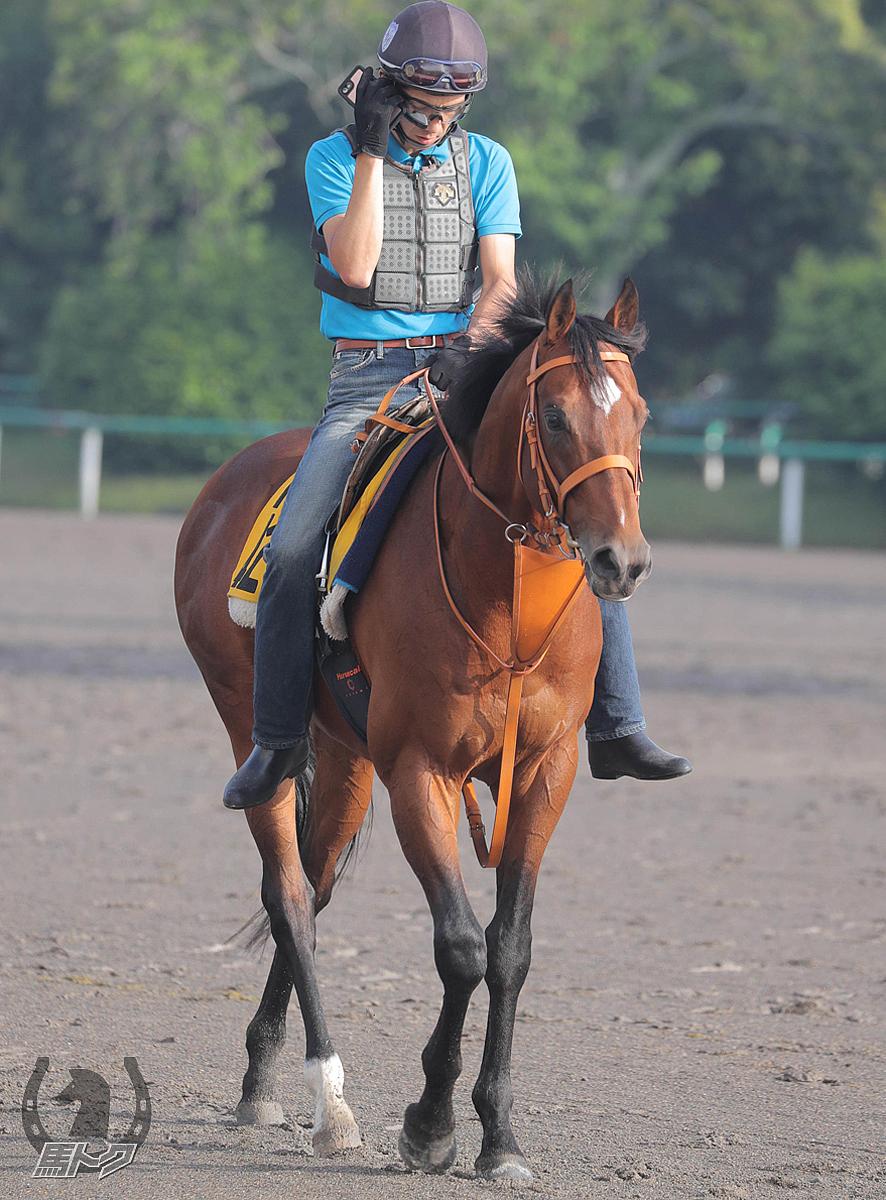 ベルキャニオンの馬体写真