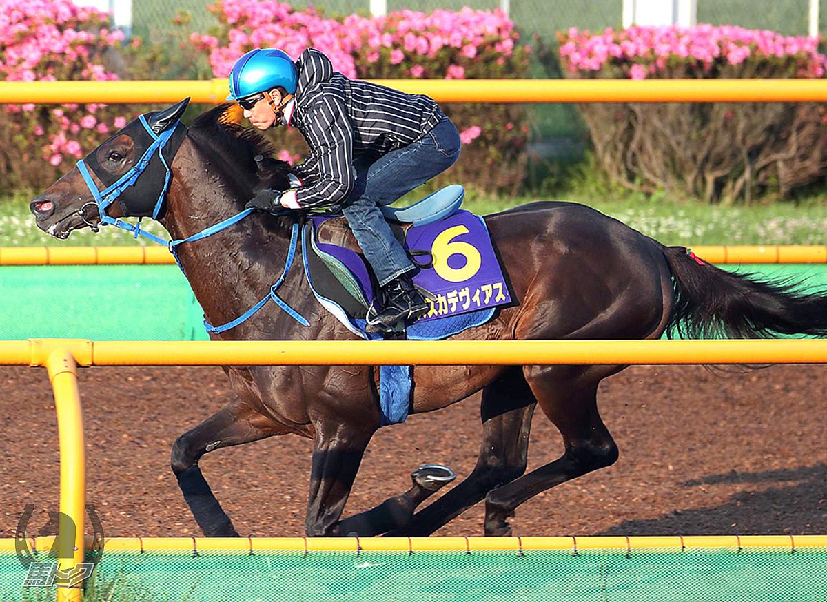 スズカデヴィアスの馬体写真