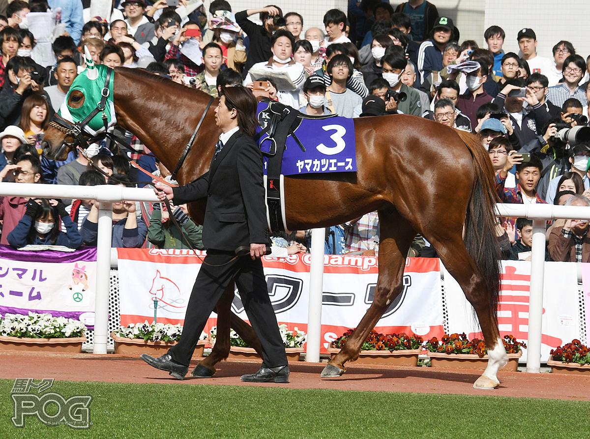 ヤマカツエースの馬体写真