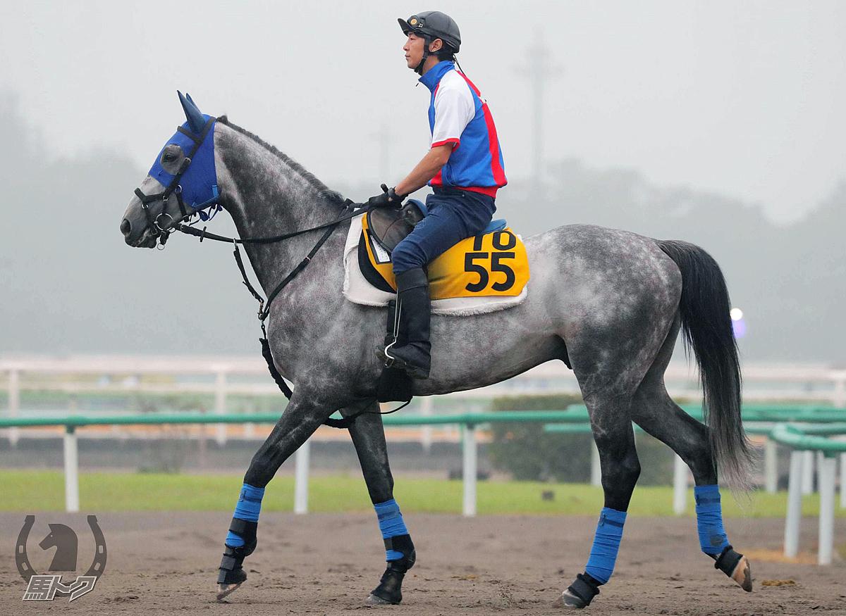 ソールインパクトの馬体写真