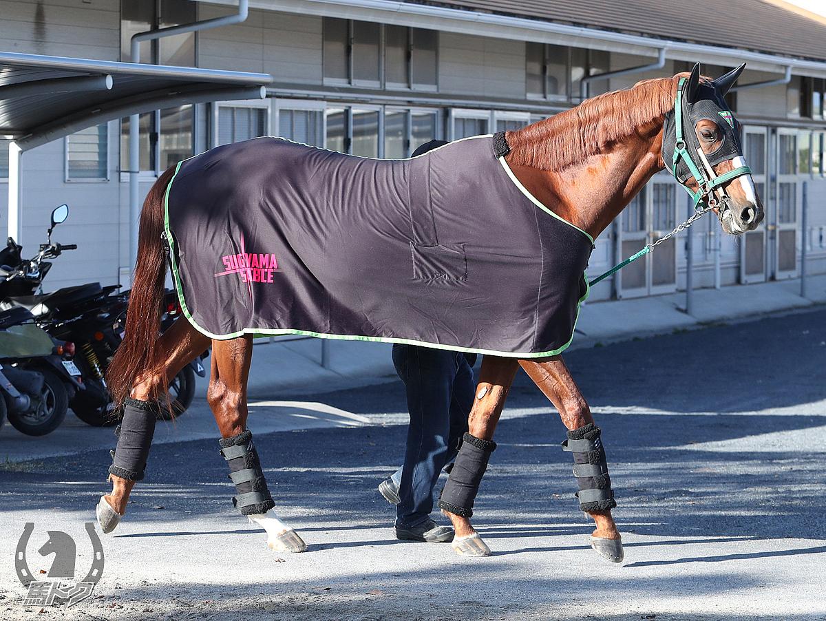 ウインテンダネスの馬体写真