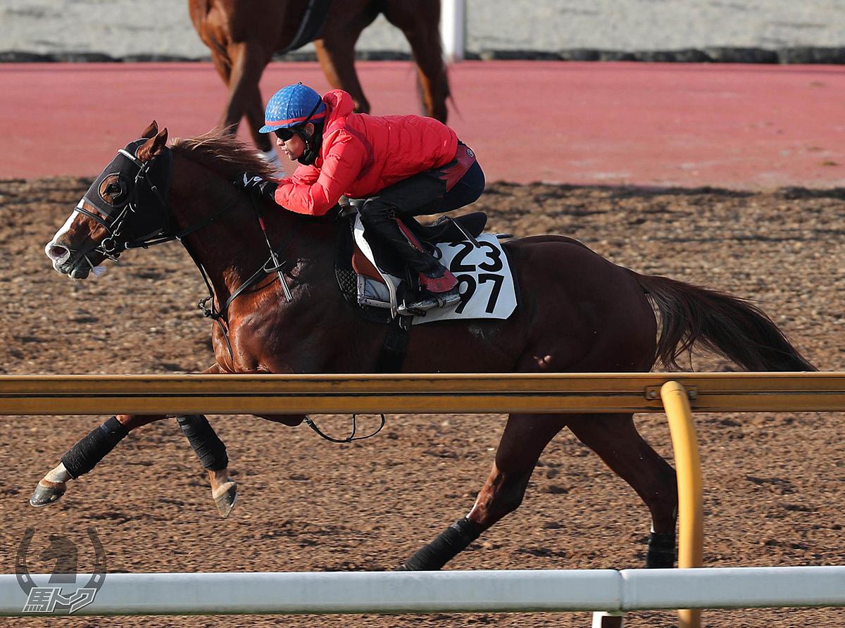ロードヴァンドールの馬体写真