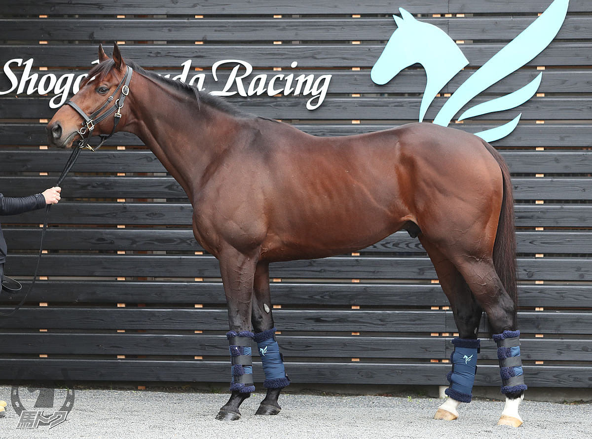 ワンダーリーデルの馬体写真
