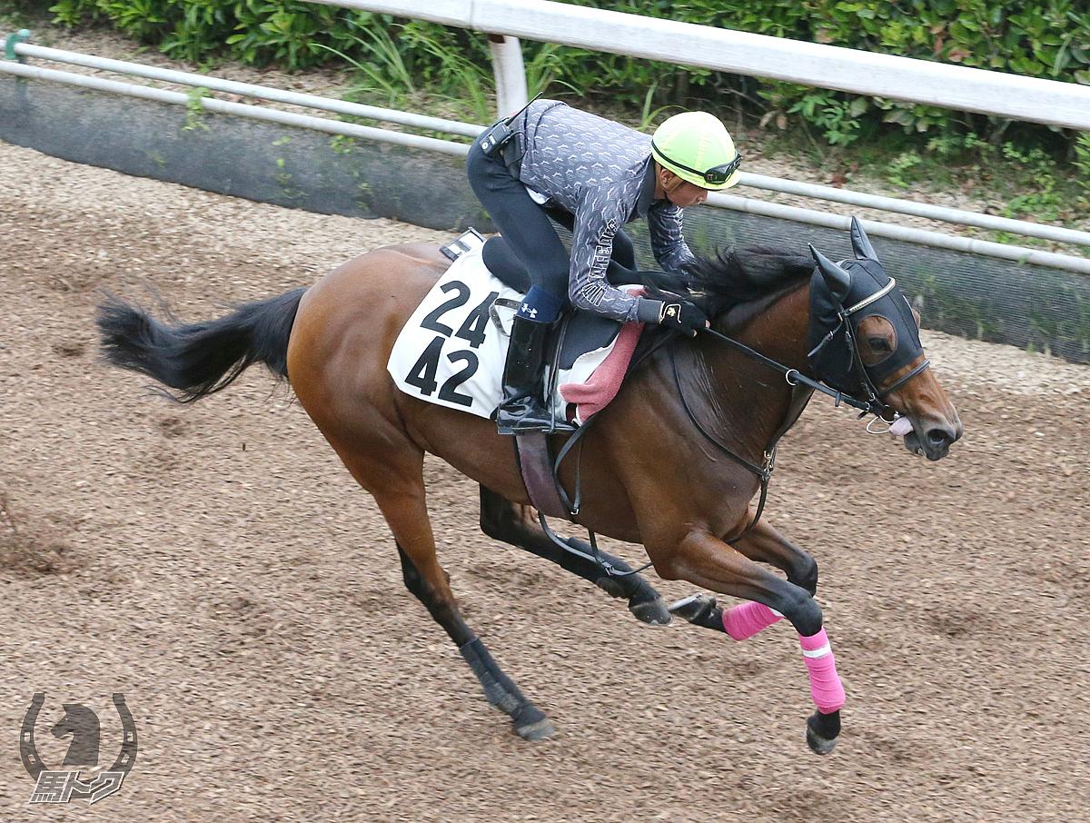 ラベンダーヴァレイの馬体写真