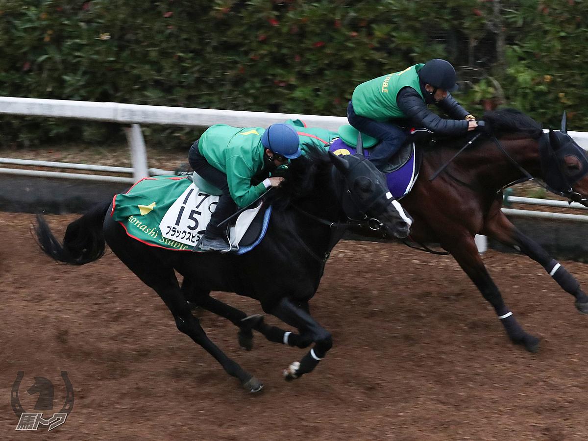 ブラックスピネルの馬体写真