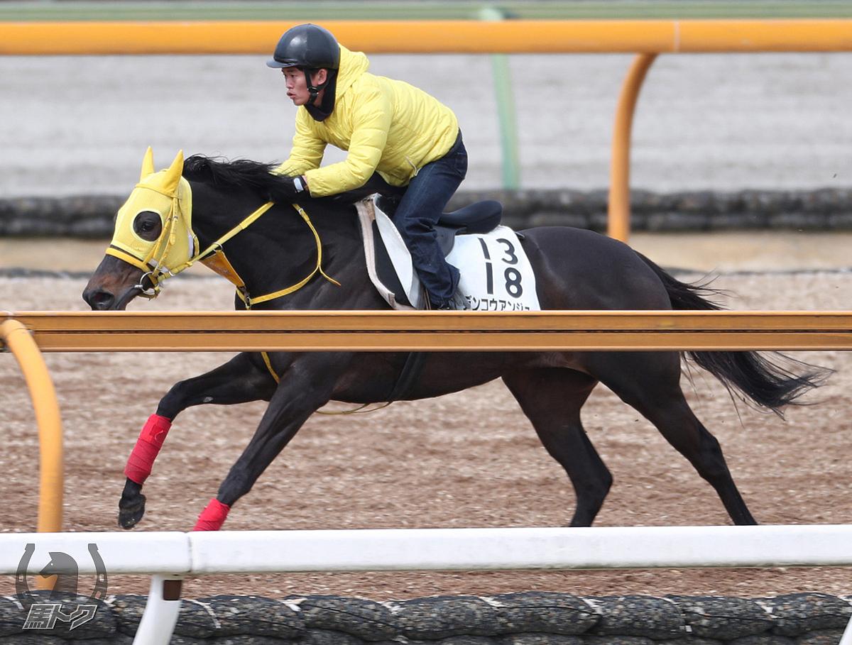 デンコウアンジュの馬体写真