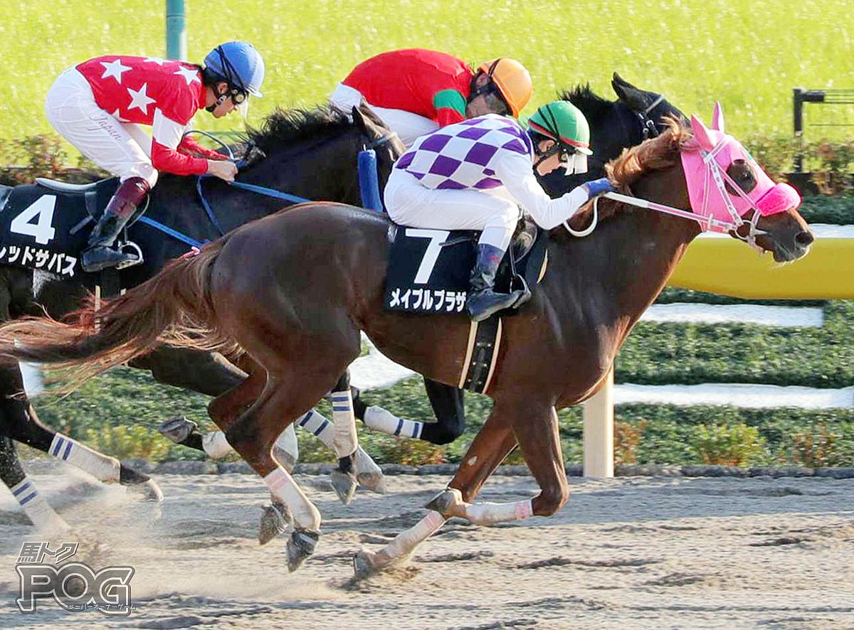 メイプルブラザーの馬体写真