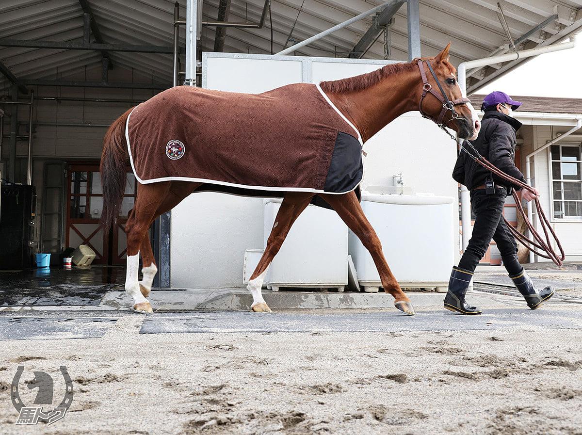 インティの馬体写真
