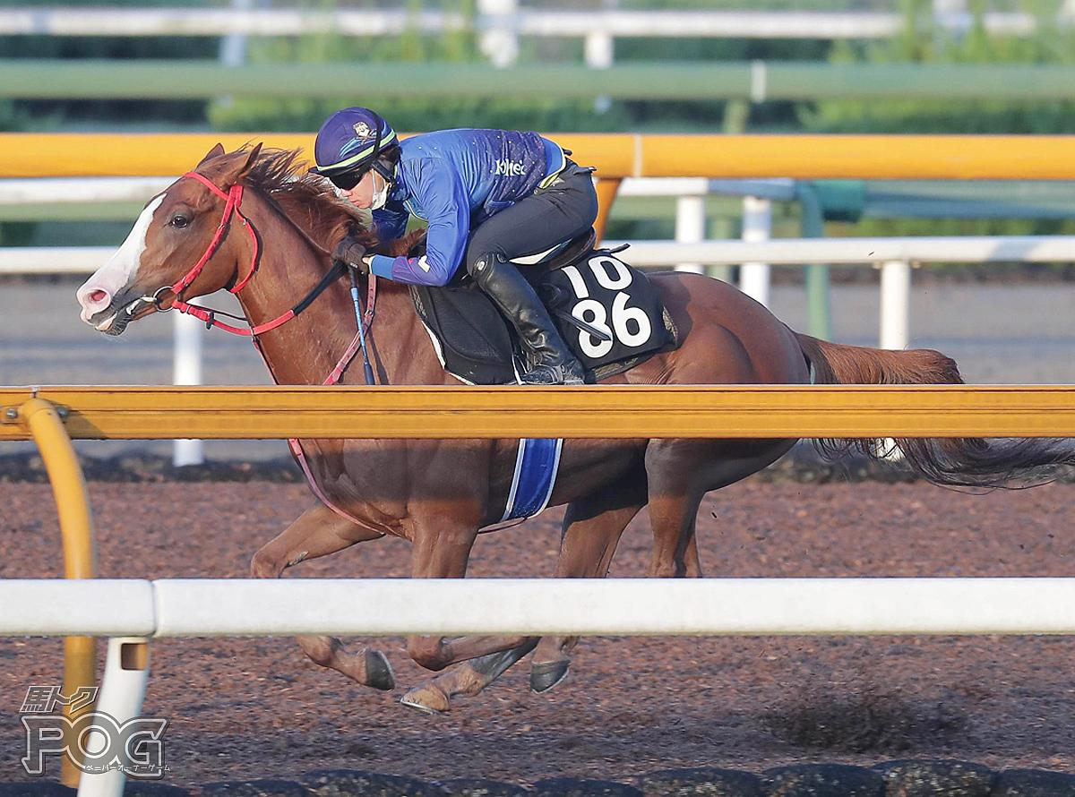 ヤマカツグレースの馬体写真
