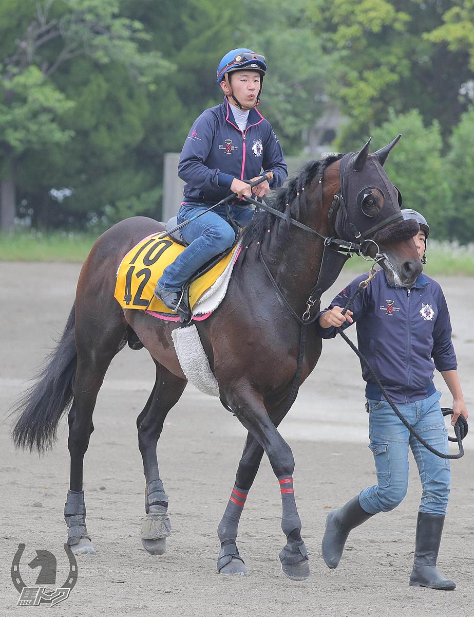 ダイワキャグニーの馬体写真
