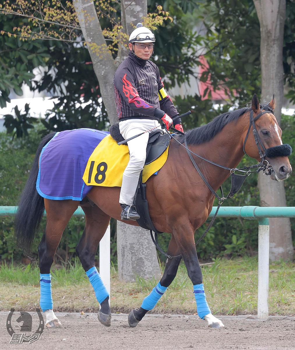 アウトライアーズの馬体写真