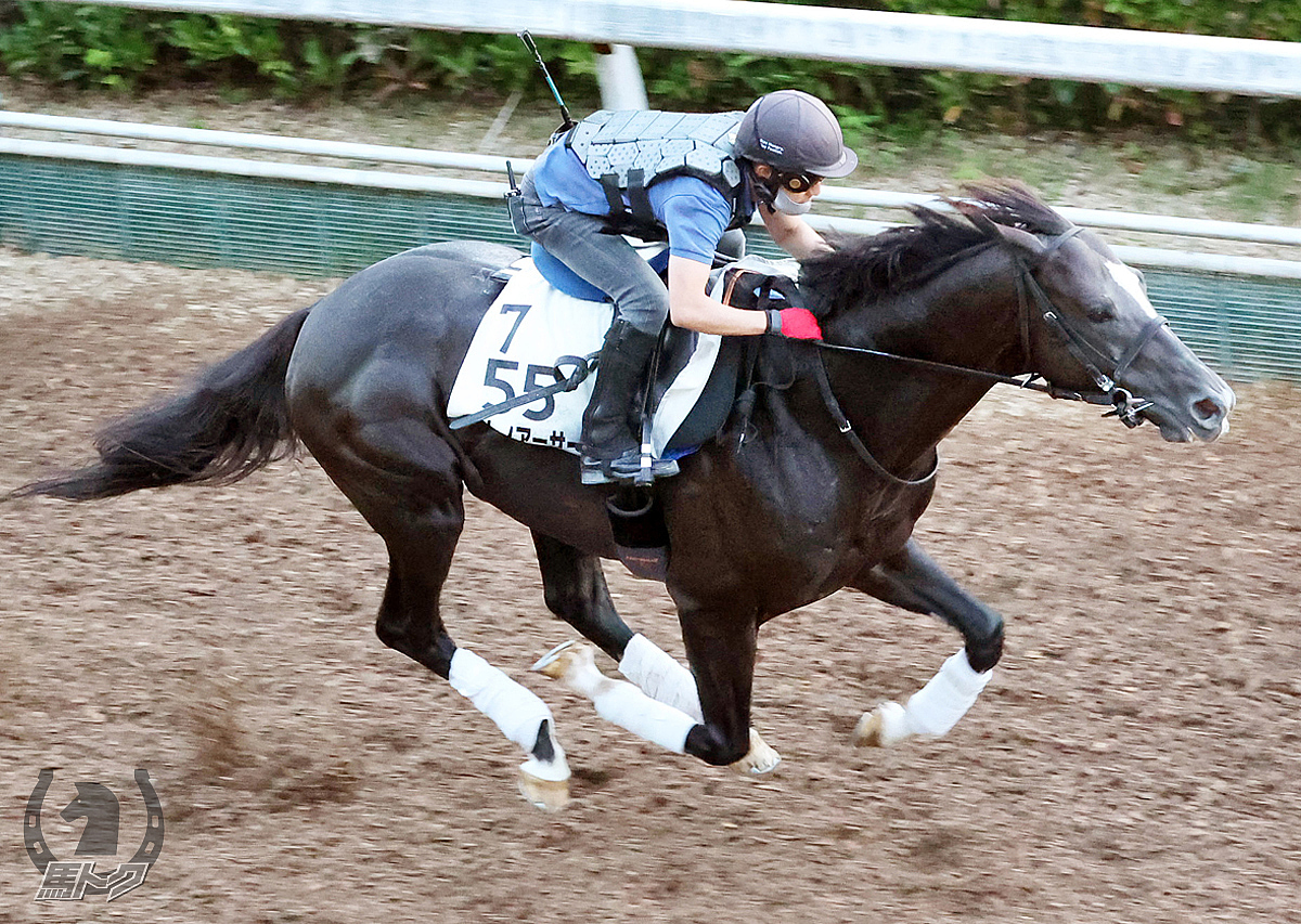 サトノアーサーの馬体写真