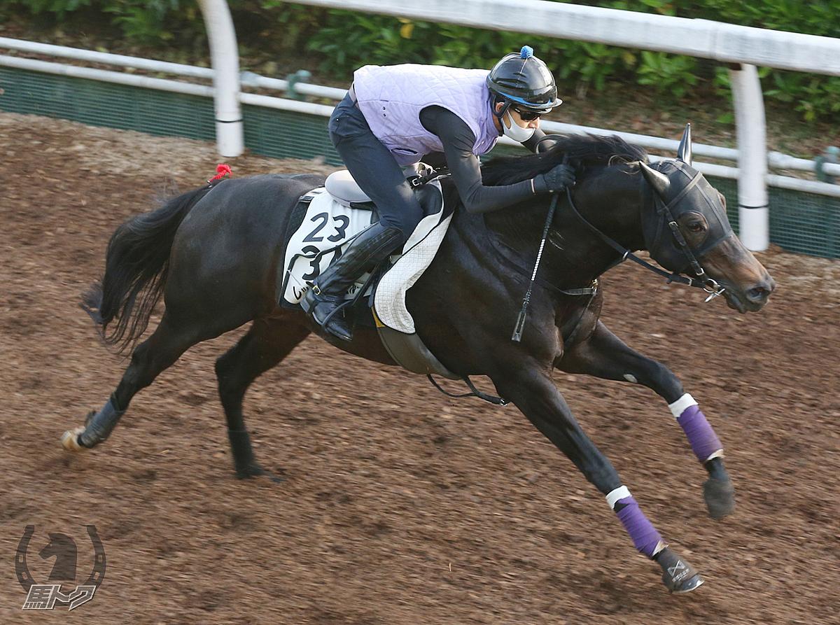 レッドアンシェルの馬体写真