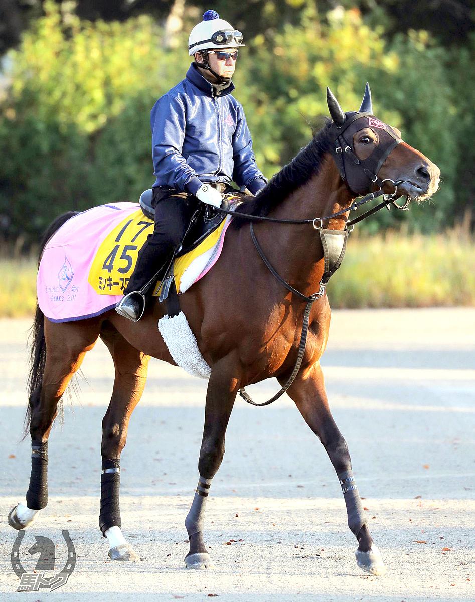 ミッキースワローの馬体写真