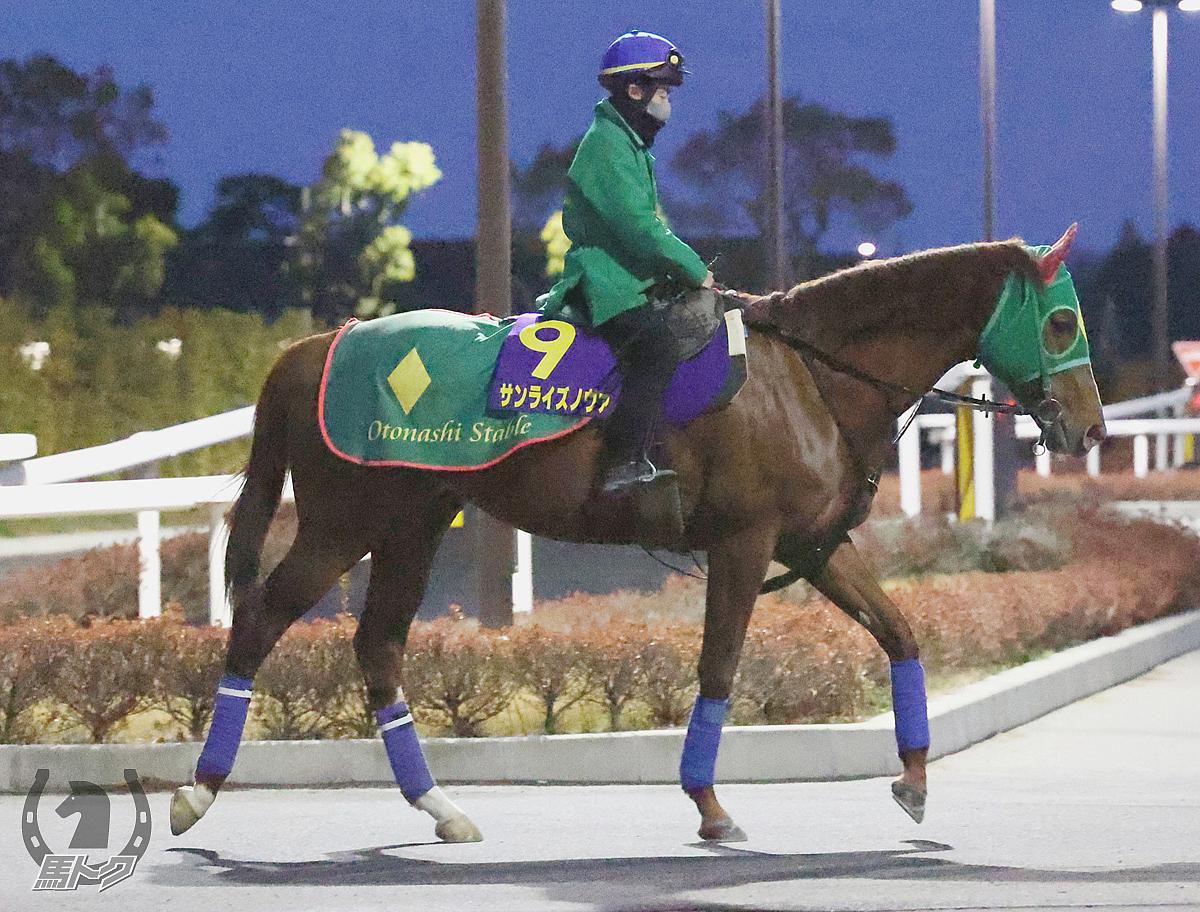 サンライズノヴァの馬体写真