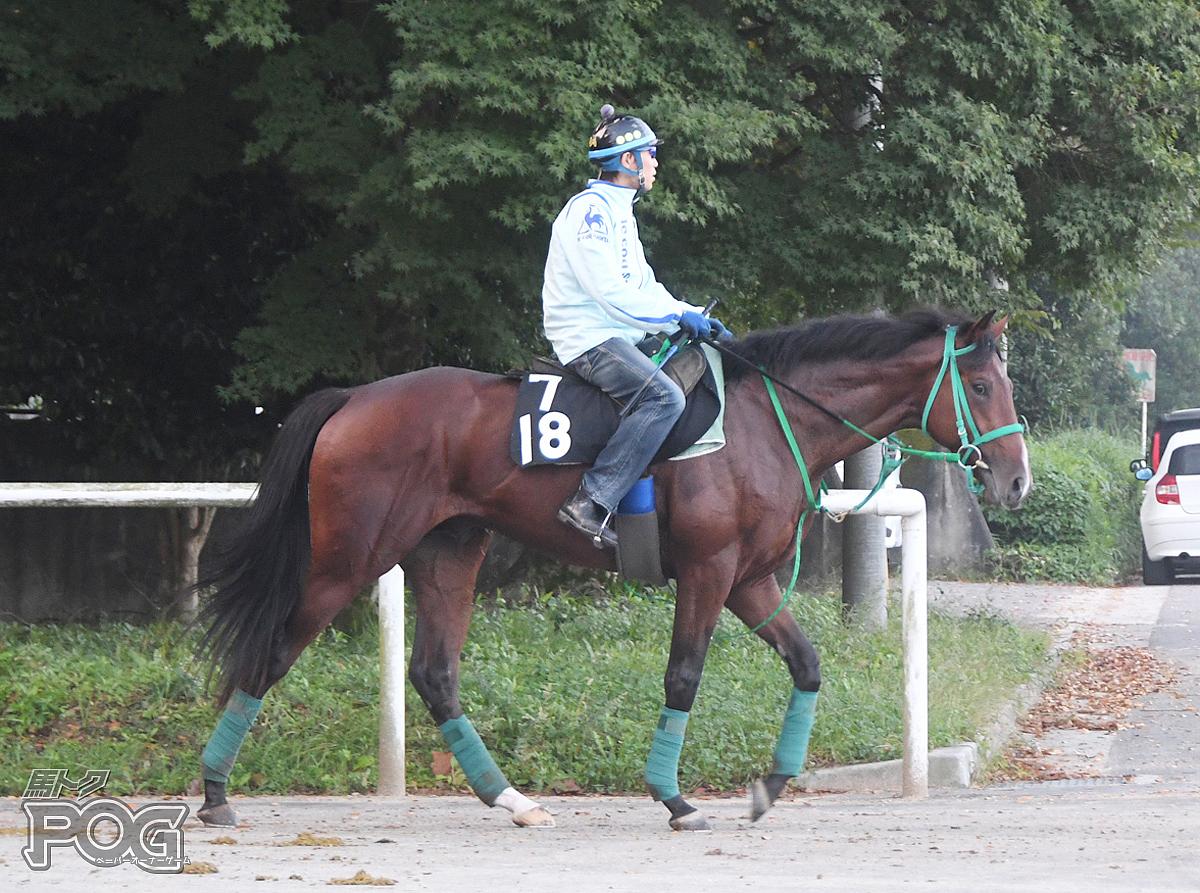 ドラセナの馬体写真