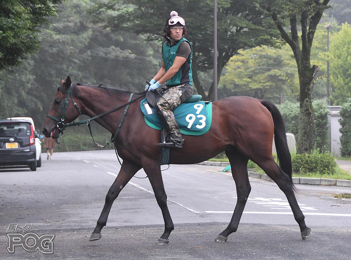 ワイズワンの馬体写真