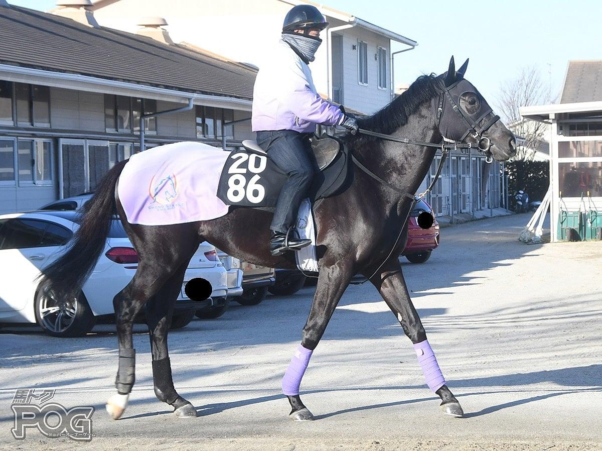オーラロードの馬体写真