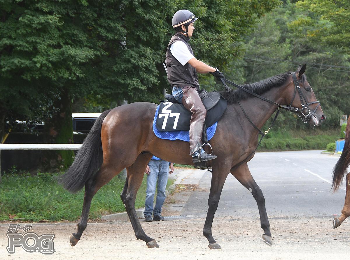 グランディスカーペの馬体写真