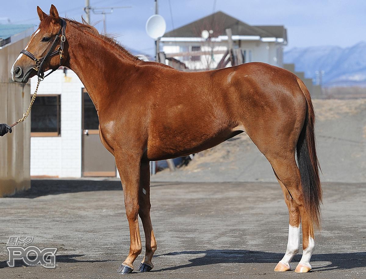 バトルパルフェの馬体写真