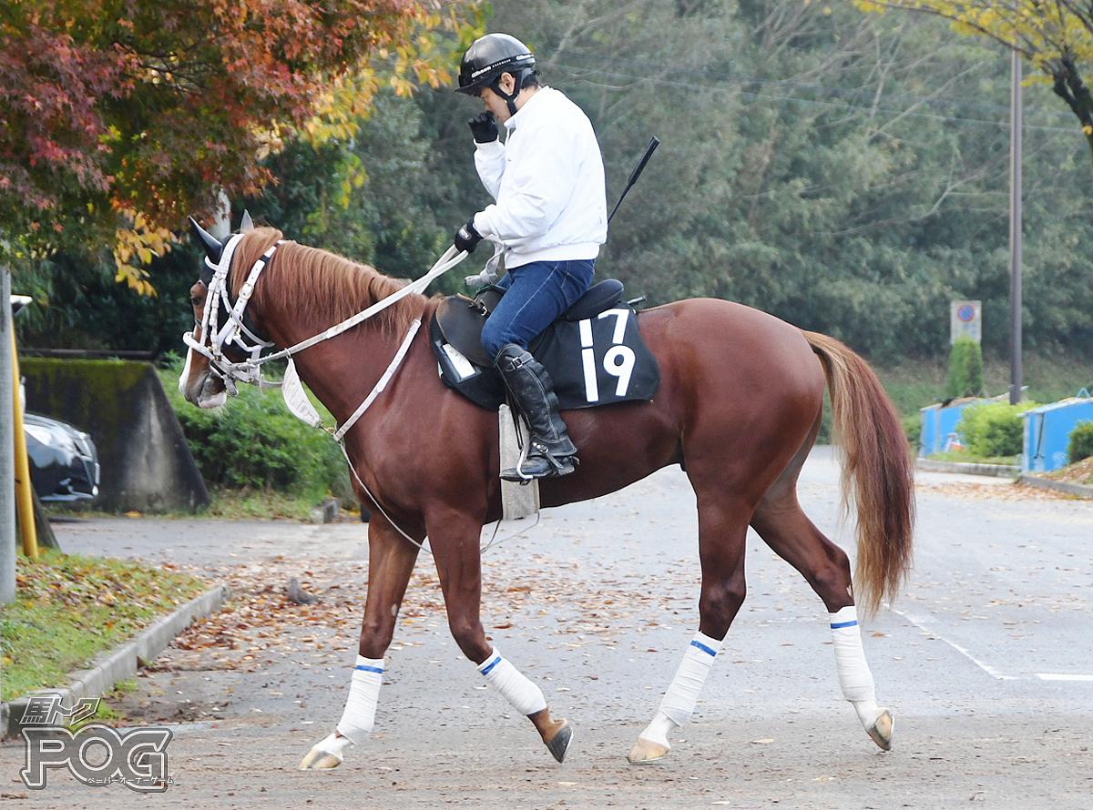 キャンドゥの馬体写真
