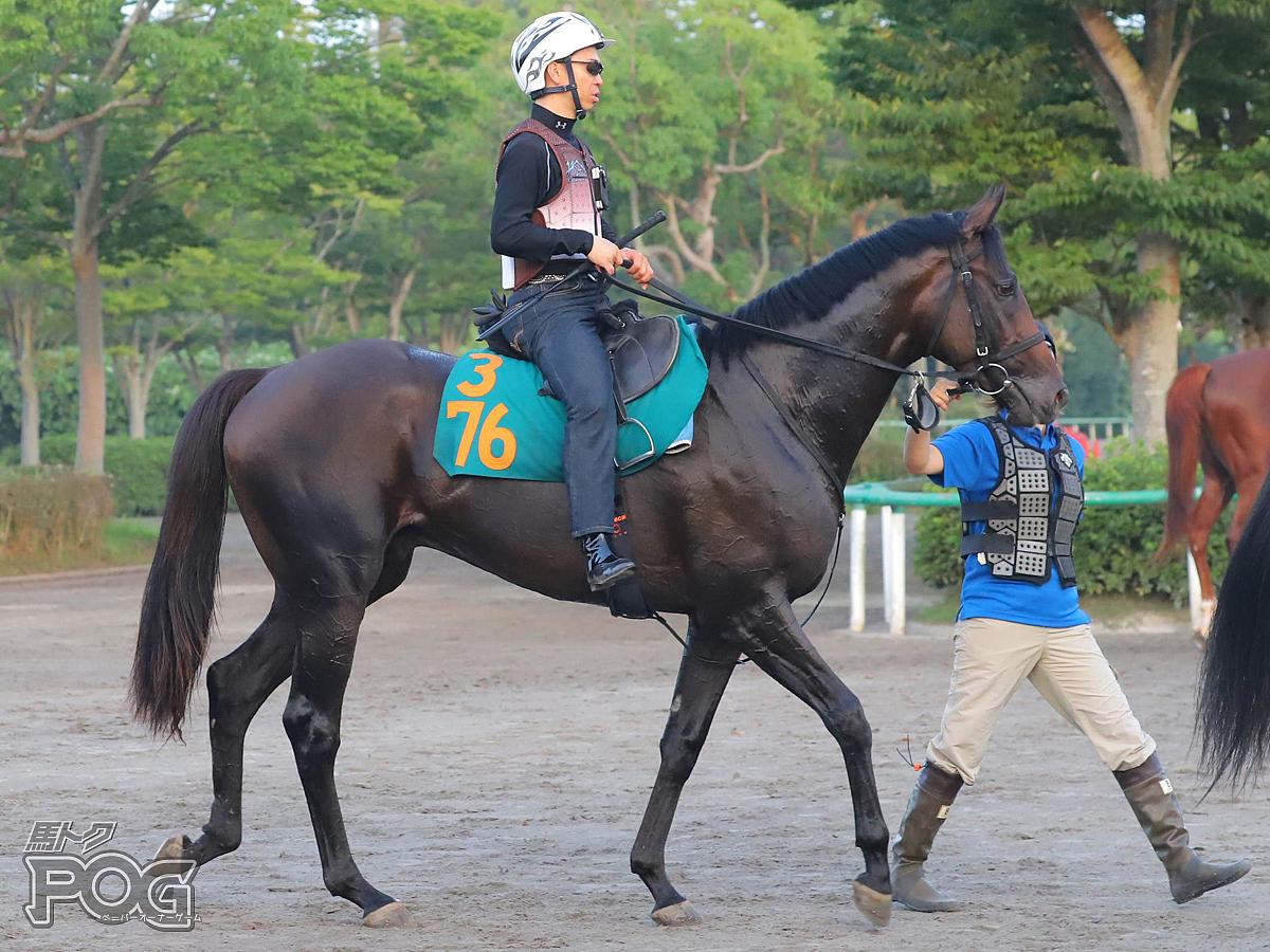 テンクウの馬体写真