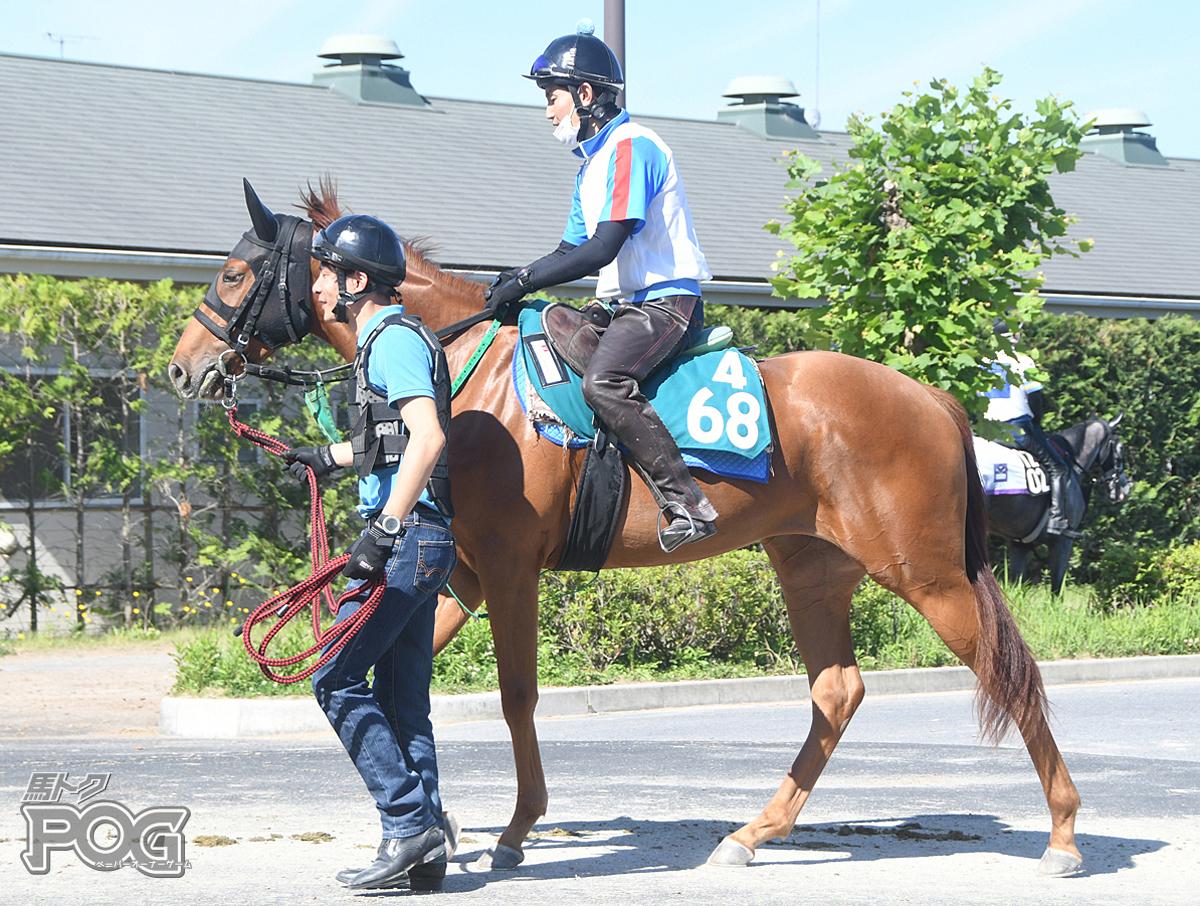 ブルベアアスパラの馬体写真