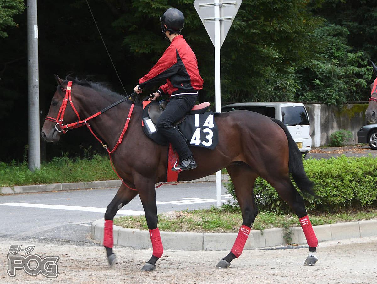 モンパルナスの馬体写真