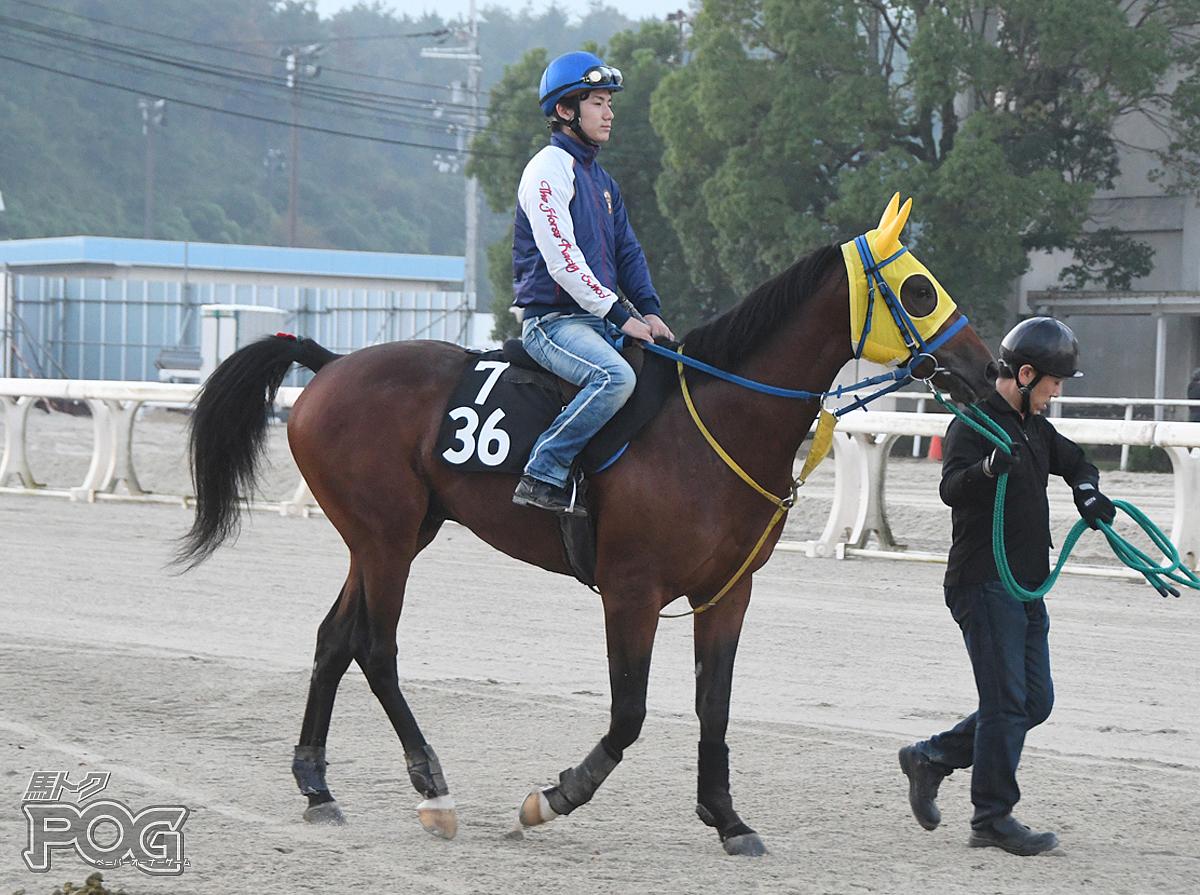ナナマイノナマハムの馬体写真