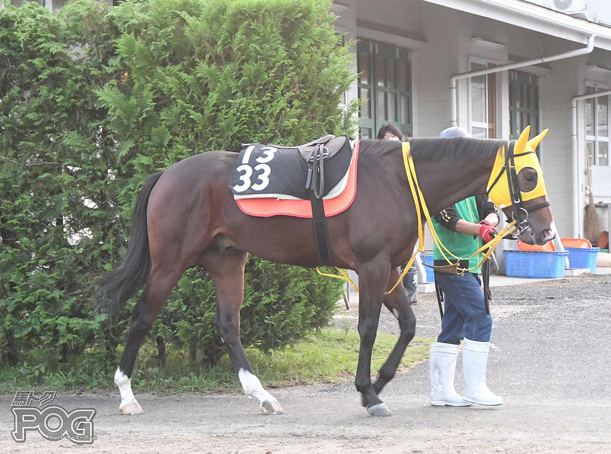 チャーチタウンの馬体写真