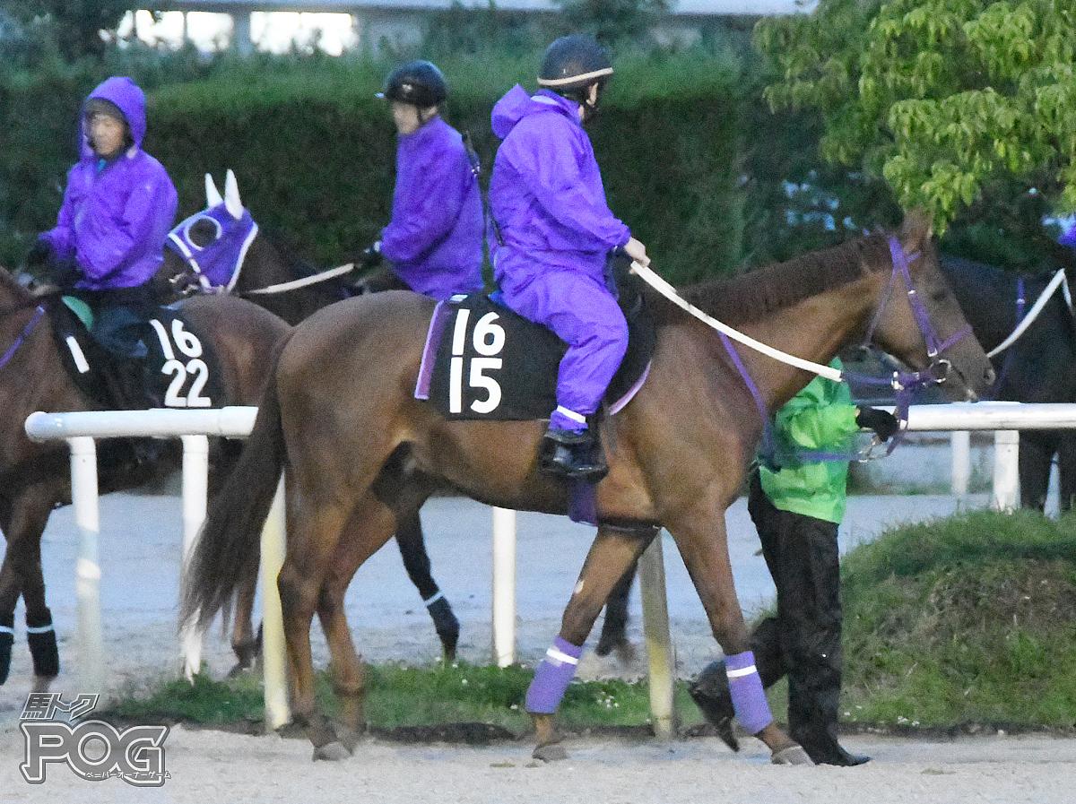 クリノヴィグラスの馬体写真