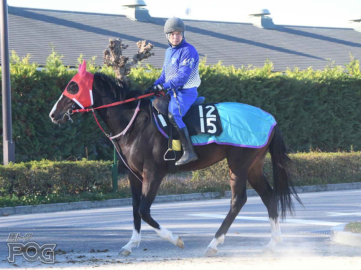 メイショウヤシチの馬体写真