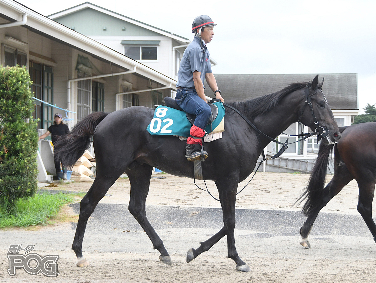 インフレーションの馬体写真