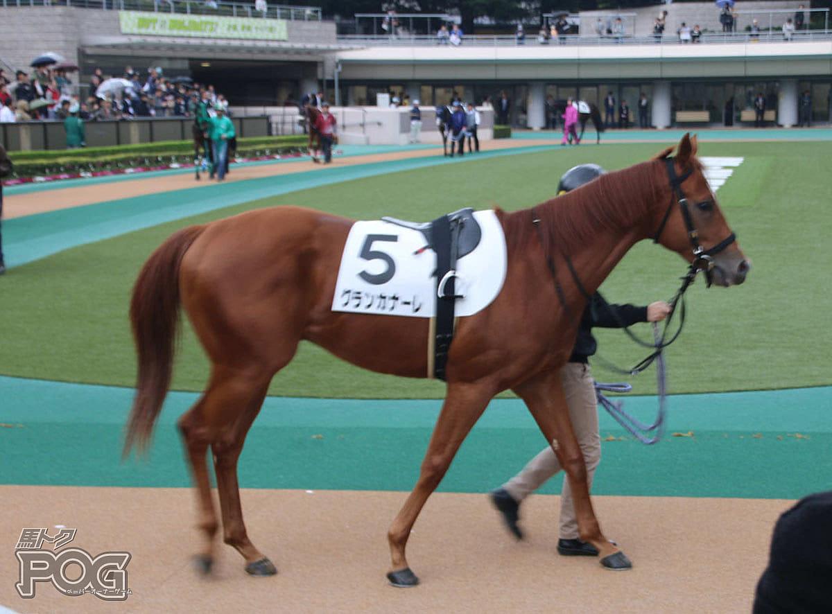 グランカナーレの馬体写真