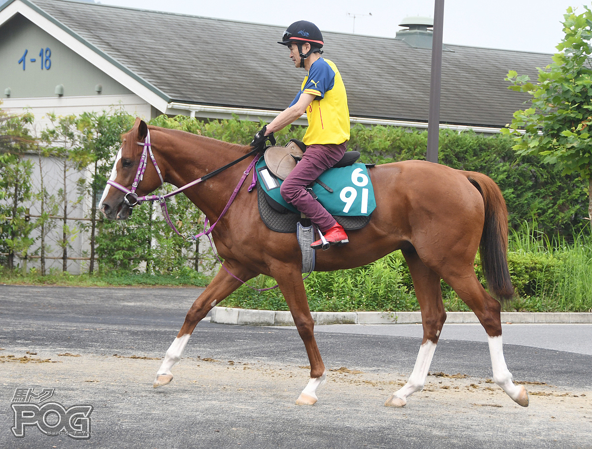 モンサンフィエールの馬体写真