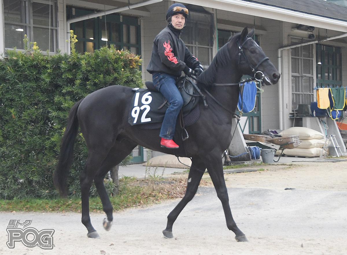 キョウワヴィランの馬体写真