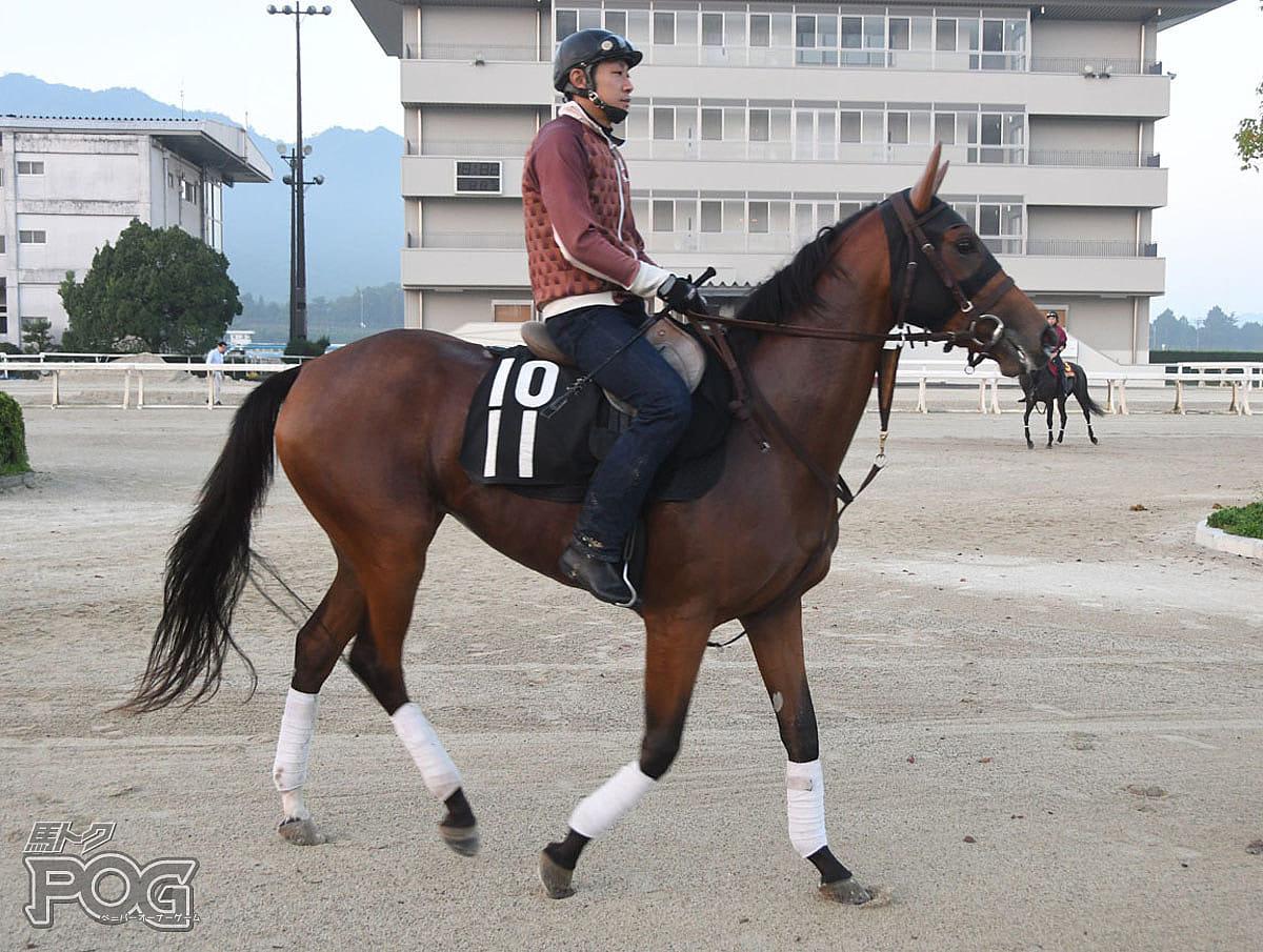 ムソウの馬体写真