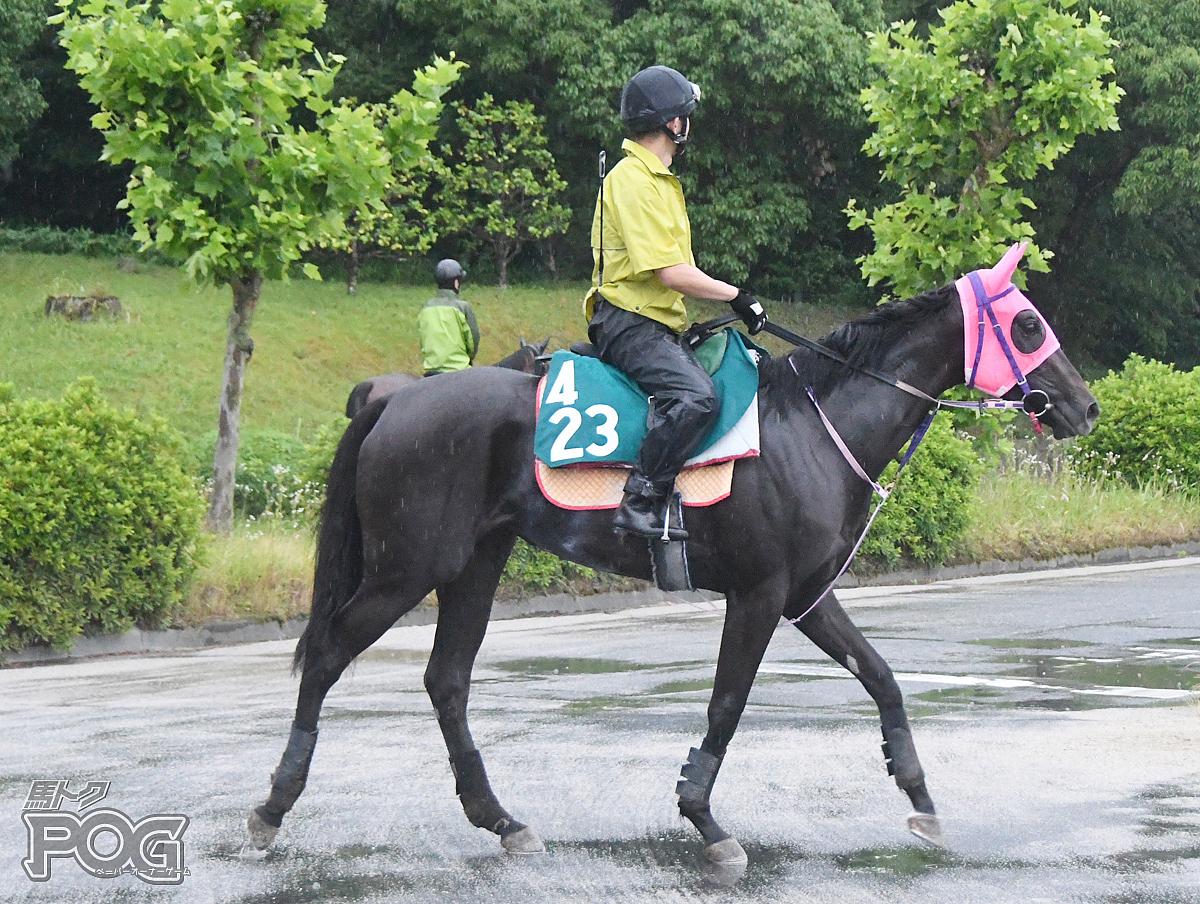 アルマアノンの馬体写真