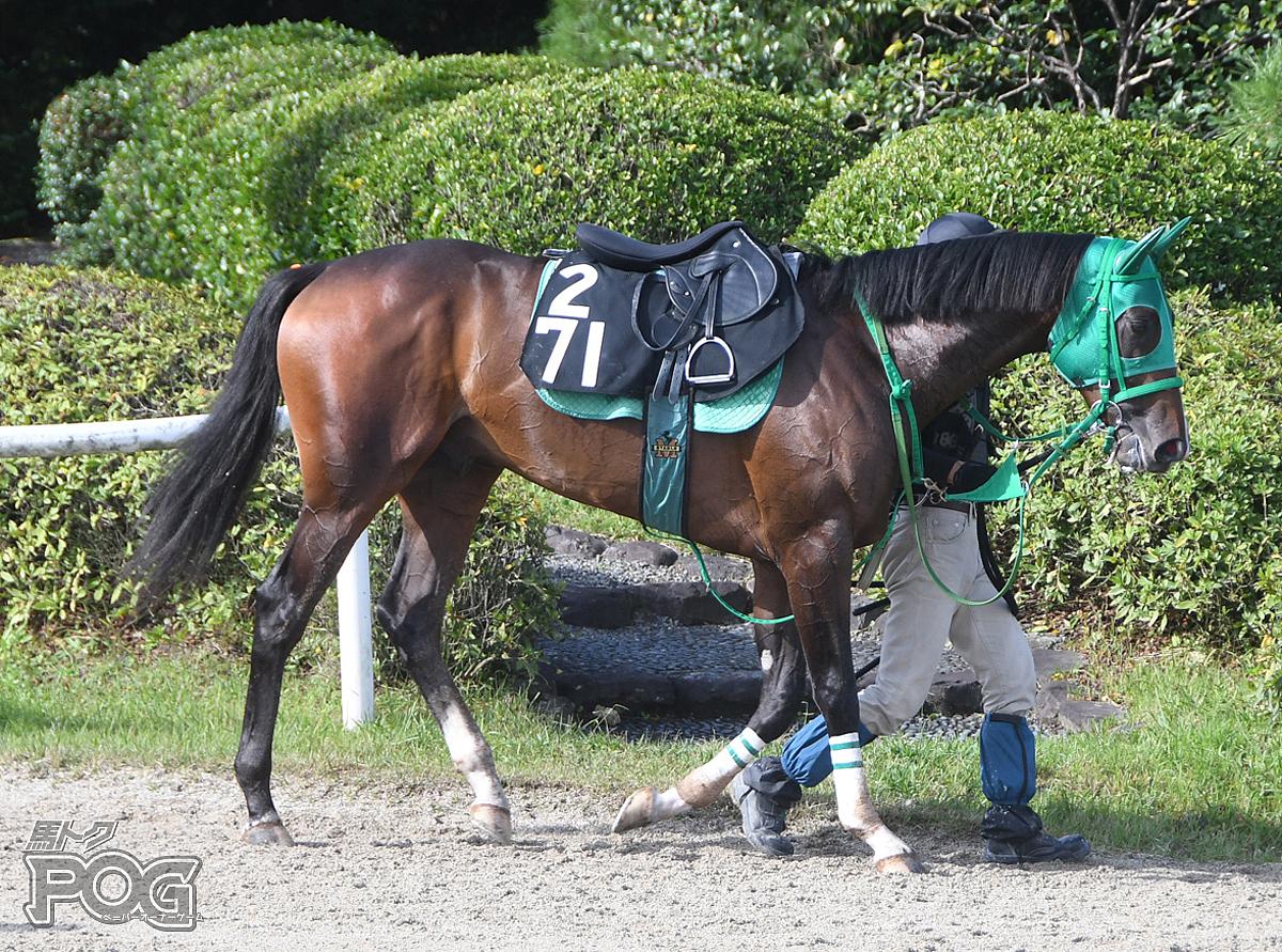 グッドキャストの馬体写真