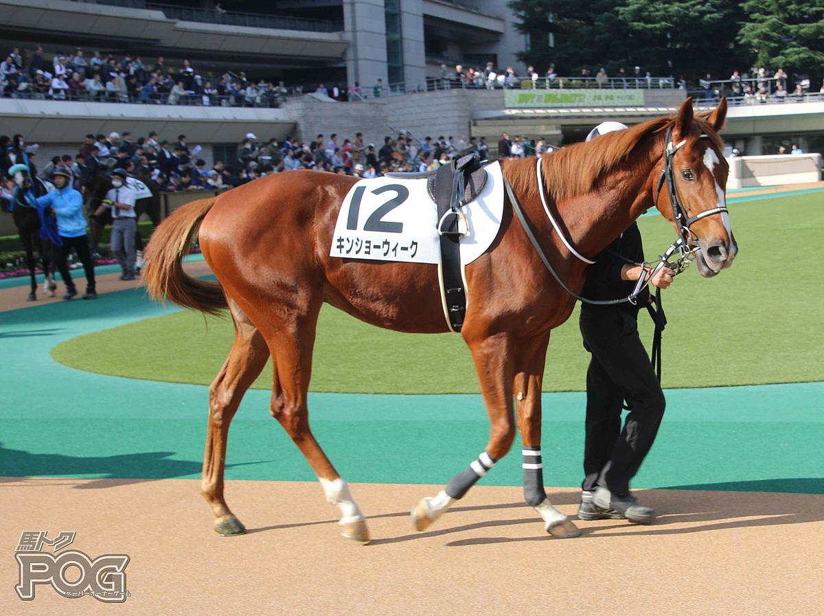 キンショーウィークの馬体写真