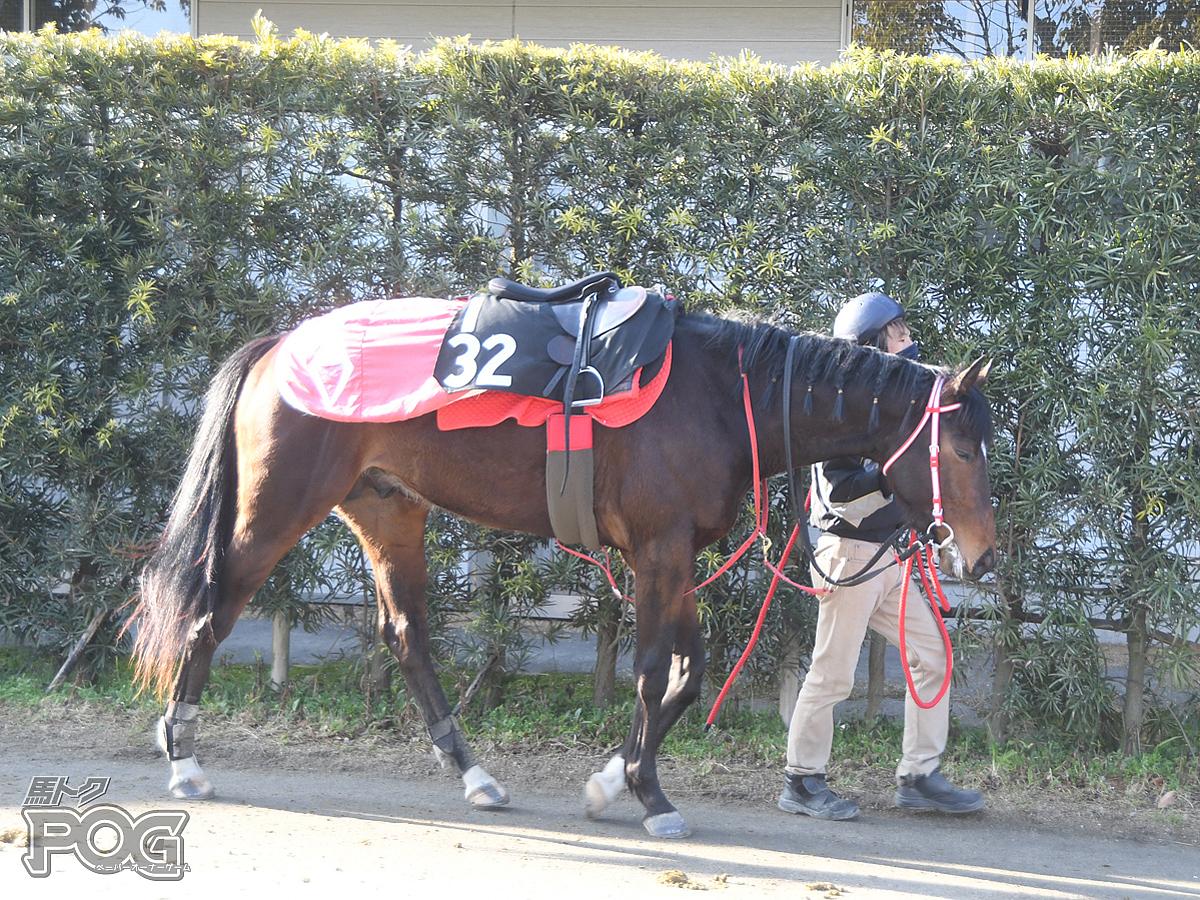 ウインフォルティスの馬体写真