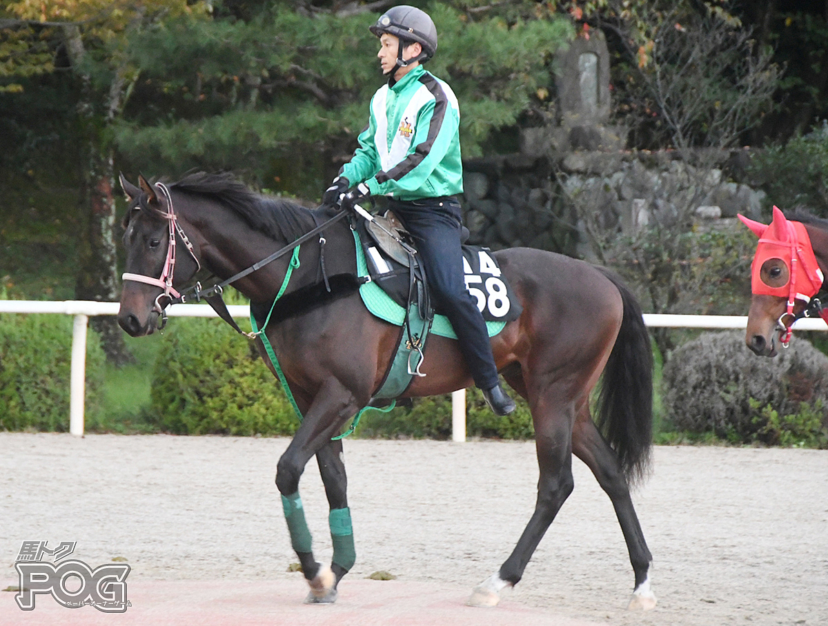 ウインハピネスの馬体写真