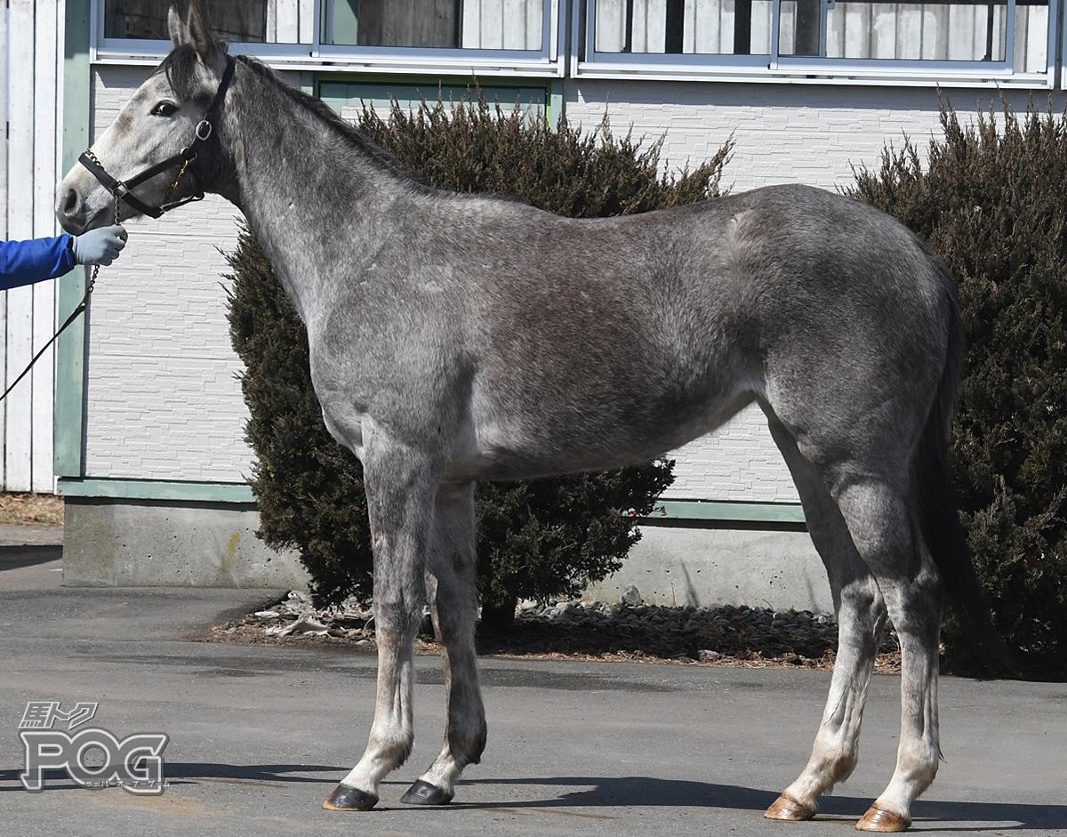 ウインアイスバーグの馬体写真