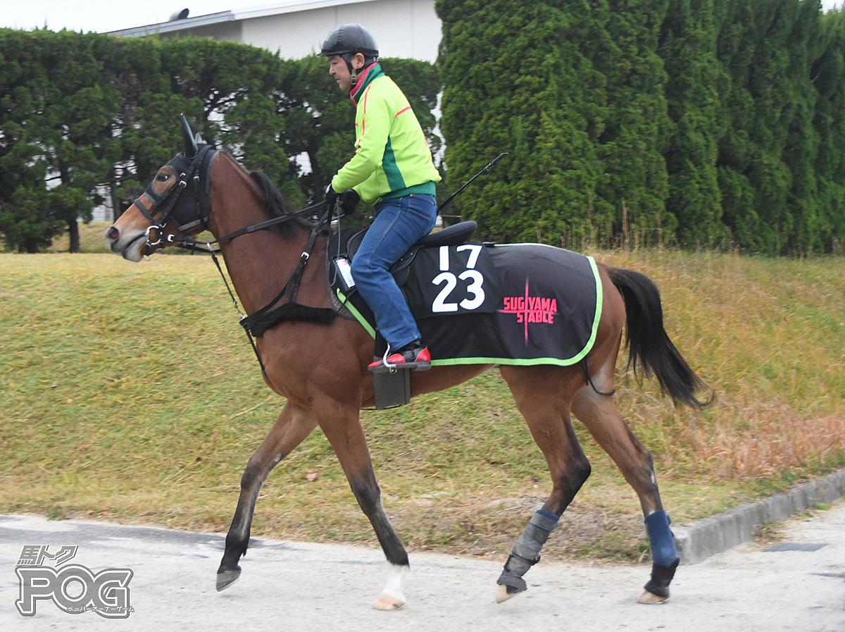 ウインプライマリーの馬体写真