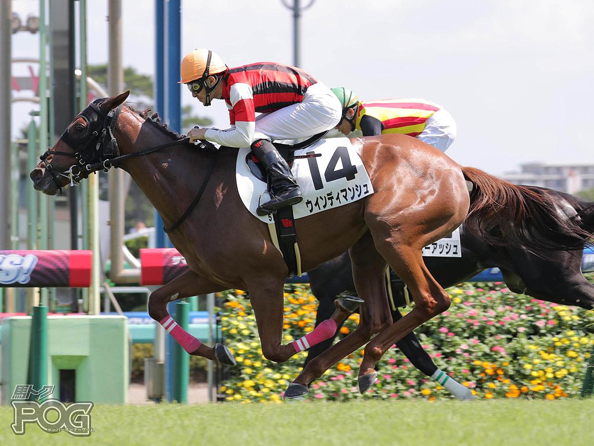 ウインディマンシュの馬体写真