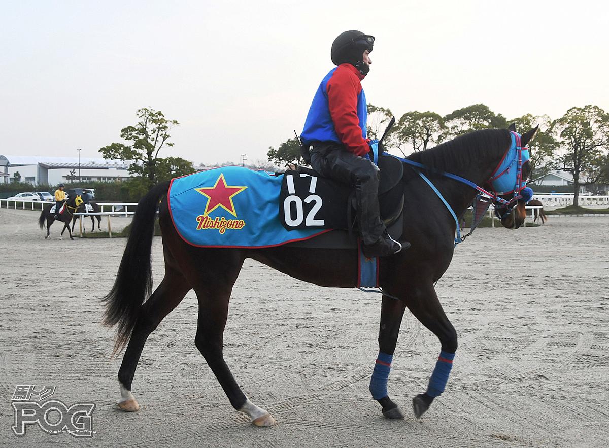 ウイントラゲットの馬体写真