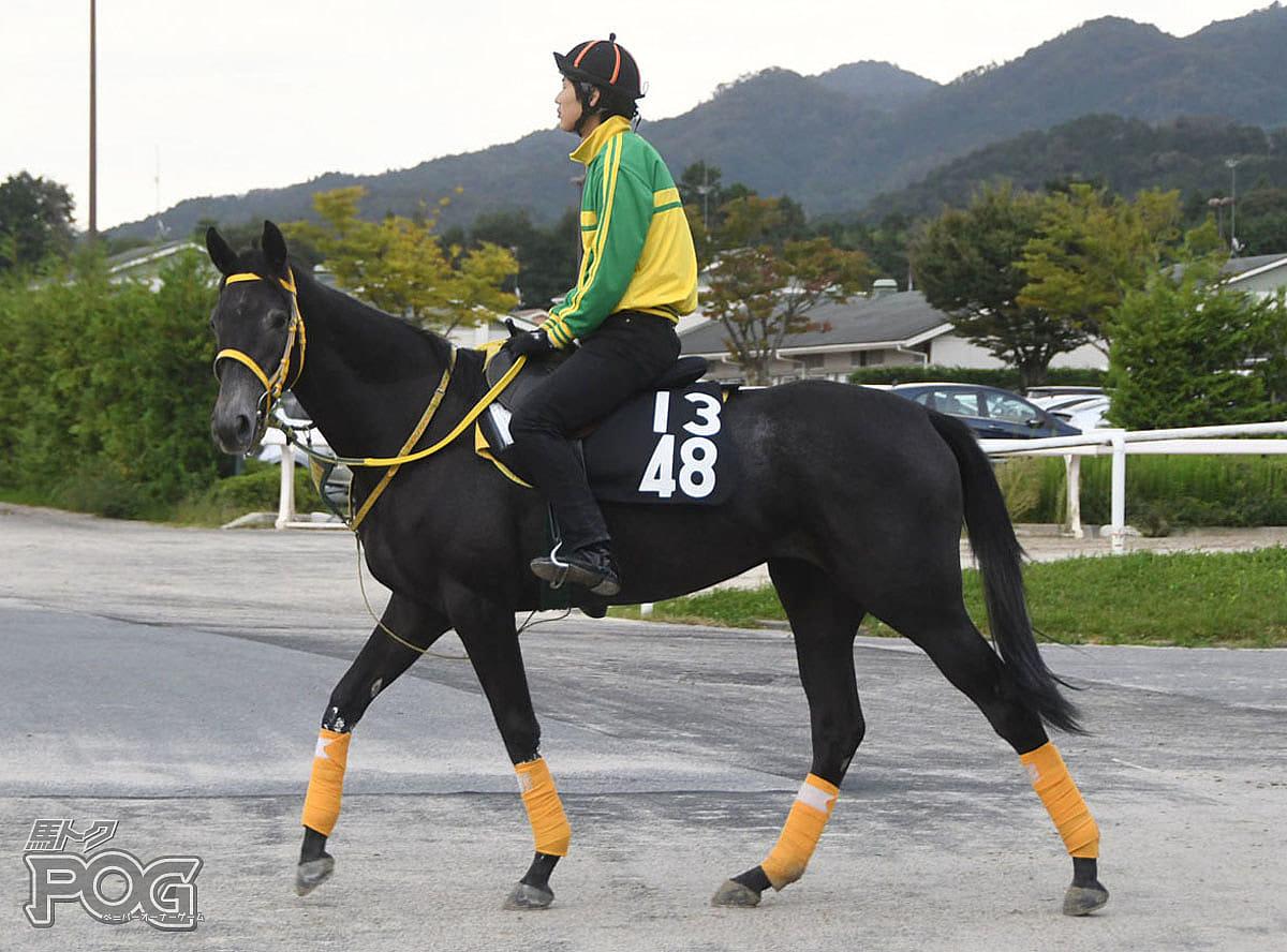ウインタリエンテの馬体写真