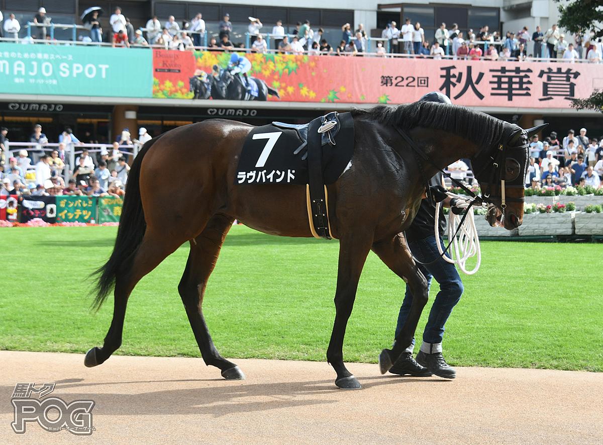 ラヴバインドの馬体写真