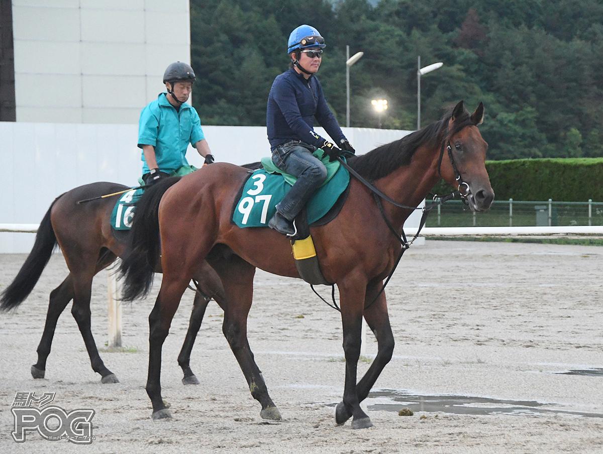 キングブラックの馬体写真