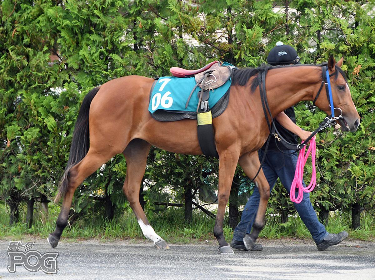 ジョウショーダイヤの馬体写真